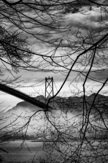 Bridge Tree