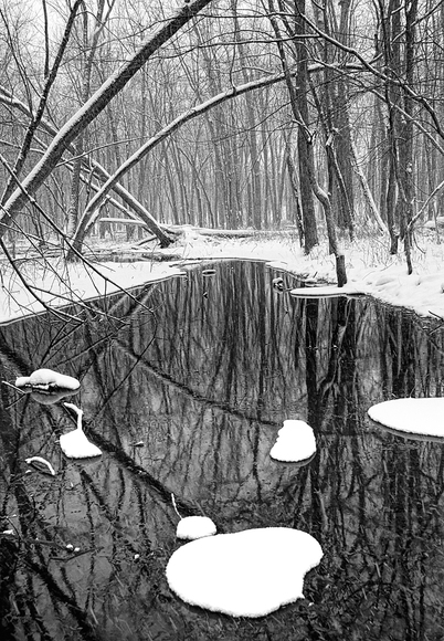 Reflections on Winter Stream