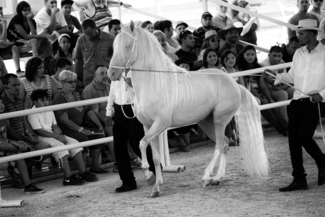 Traditional Fair Show
