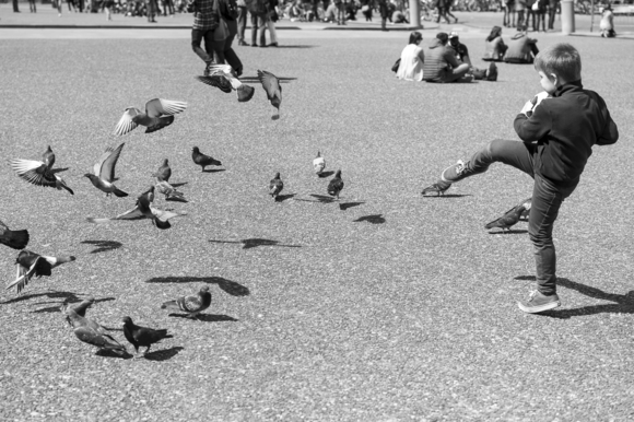 Pigeon Football