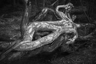 Body in the Wood