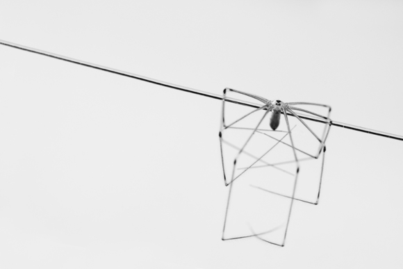 Spider on a Wire