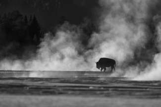 Thermal Bison