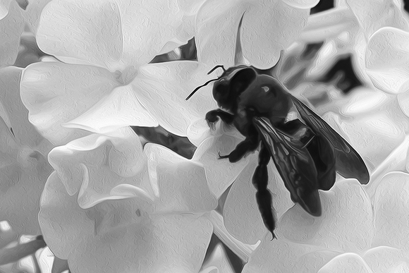 Bee in the Phlox