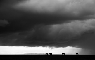 Elephants under the thunder skies