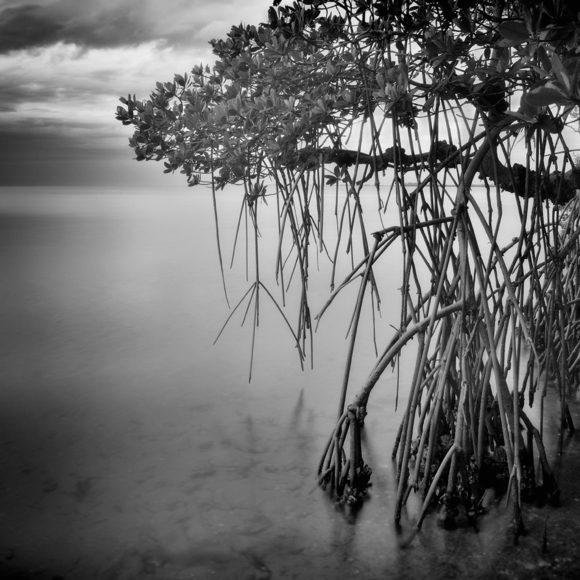 Storm and Stillness (Terra Ceia Bay, Florida)