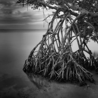 Gathering Storm, Terra Ceia Bay, Florida