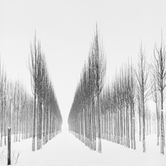 Rows of Trees, Study 3