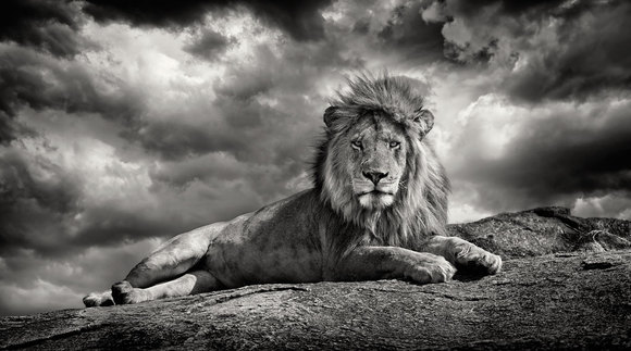 king on the rock