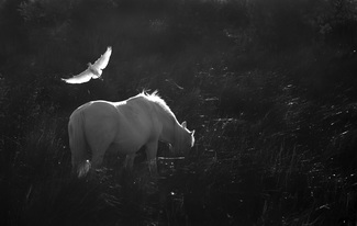 Dream of the White Horse