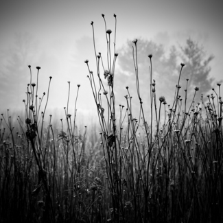 Meadow Plants 1